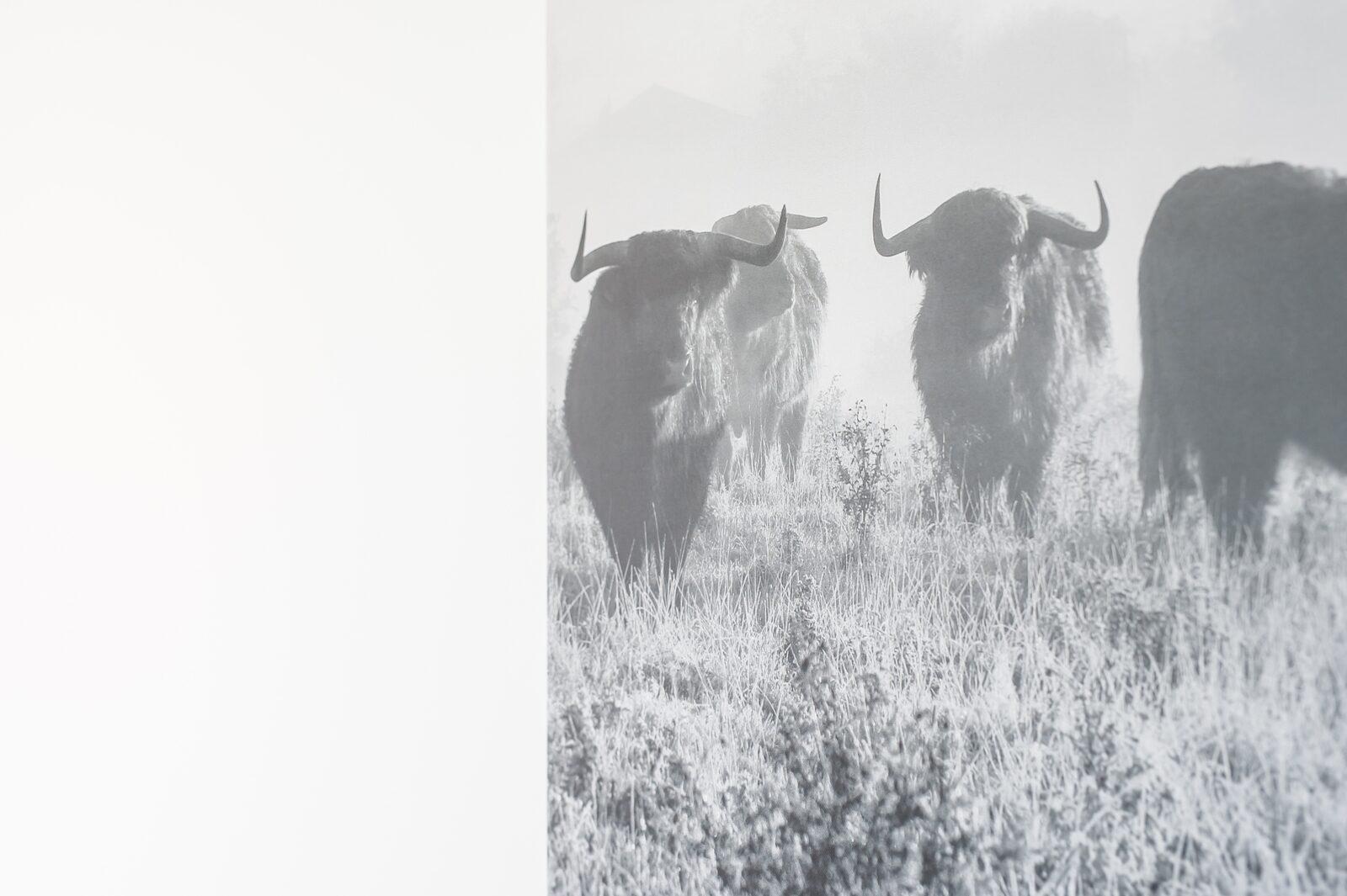 Zandbank 7 | De Groote Duynen