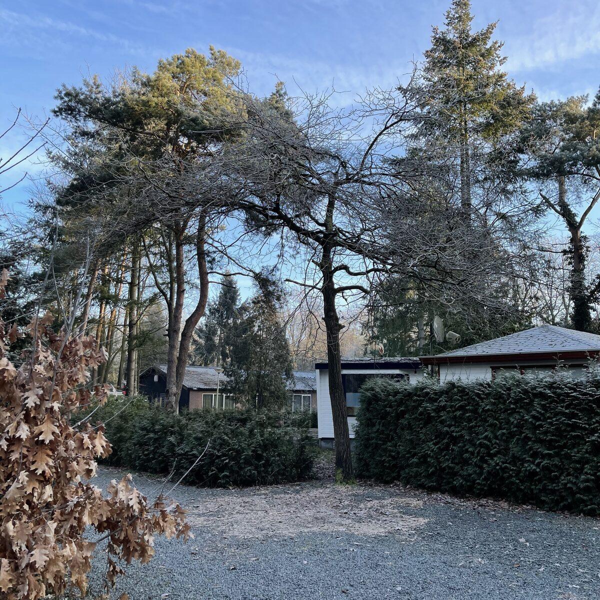 IJsselheide - Home Tree   6 Pers.
