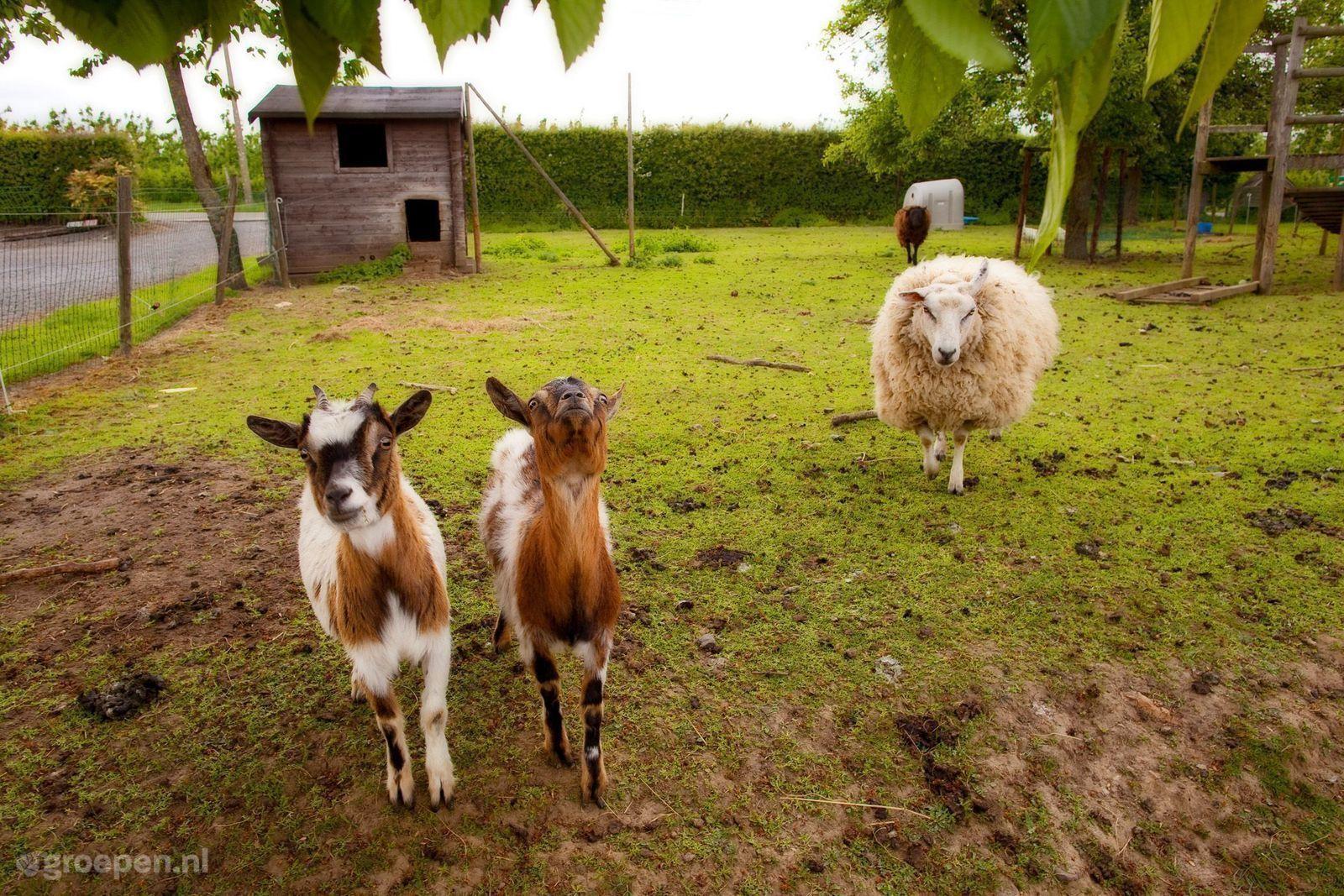 Vakantieboerderij Teuven
