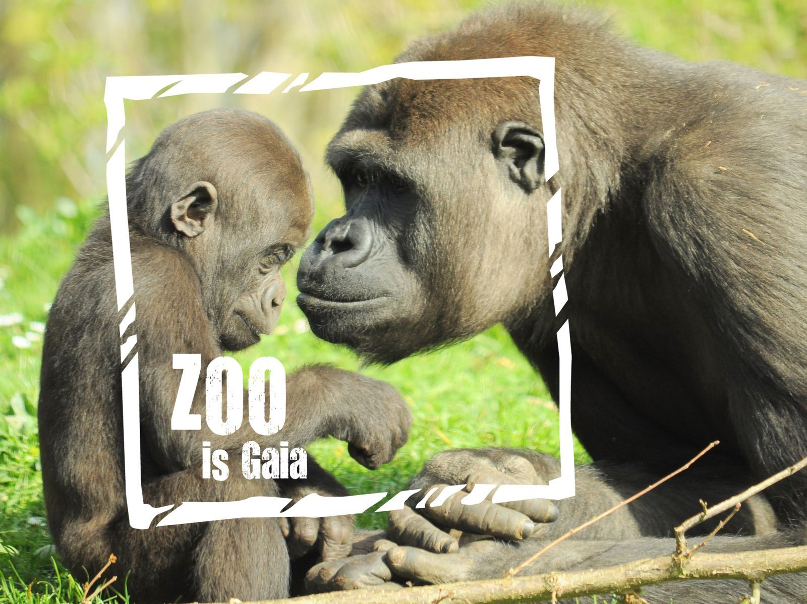 Gaia Zoo Package