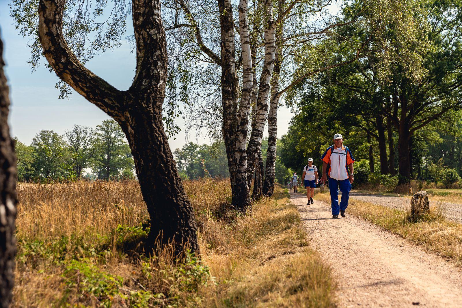 Reggestreek Wandel4daagse, verblijf 6 dagen in een luxe accommodatie inclusief halfpension - 2021